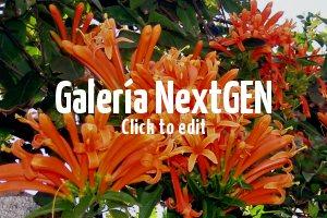 Venta de plantas trepadoras en barcelona provincia for Jardineria barcelona centro
