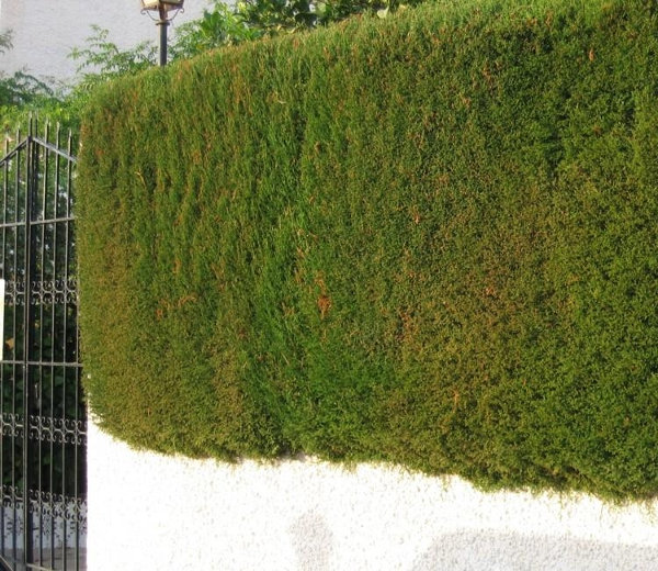 Venta de con feras en barcelona centro de jardiner a for Jardineria barcelona centro
