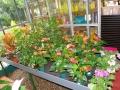 comprar-plantas-interior-barcelona