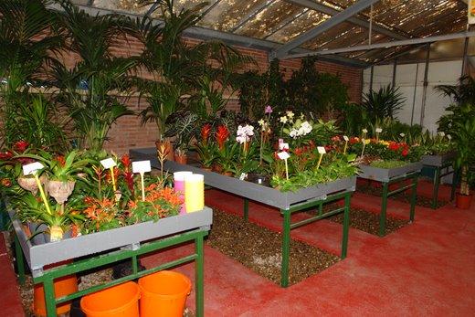 Venta de plantas de interior en barcelona dracenas for Jardineria barcelona centro