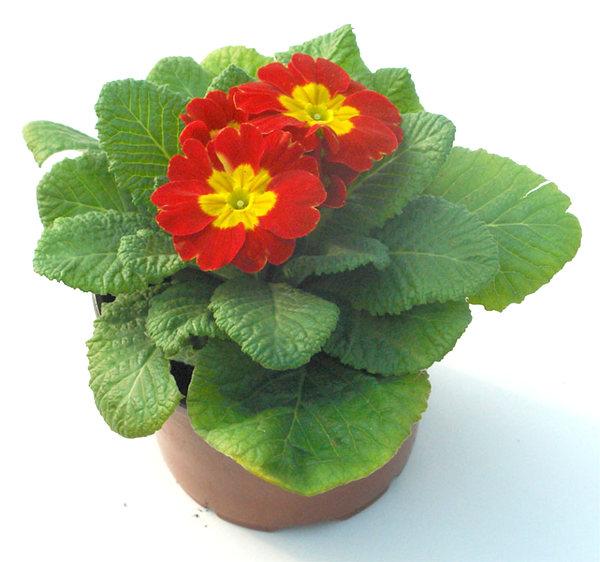Venta de plantas arom ticas culinarias y medicinales for Centros de jardineria barcelona