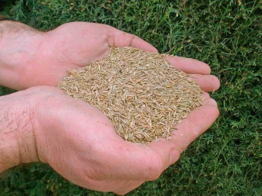 venta-semillas-de-cesped-barcelona