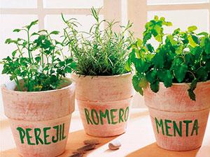 plantas-aromaticas-en-maceta