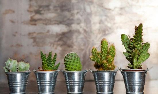 venta-cactus-crasas-barcelona-garden