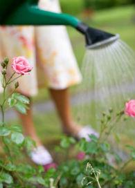 riego-rosales