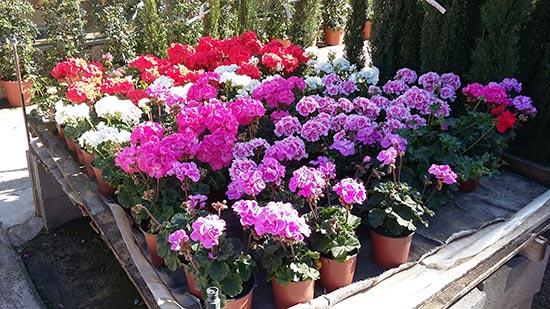 Agenda del jard n de abril centro de jardiner a s nchez for Plantas de exterior