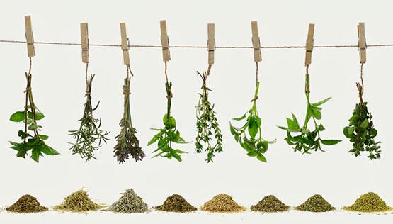 Cuidados y usos de las plantas aromáticas, culinarias y medicinales.