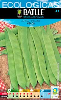 plantar-judias-verdes-julio
