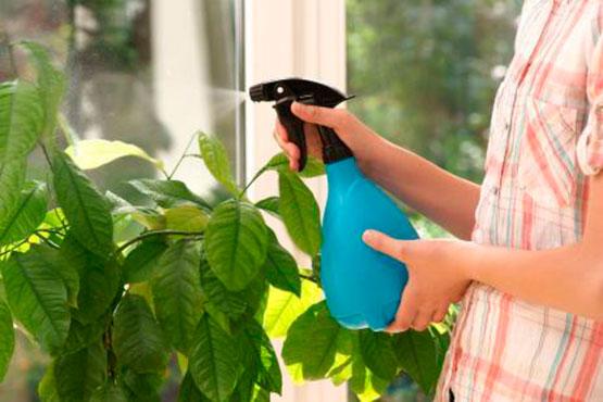 pulverizar-plantas-interior-verano-calor