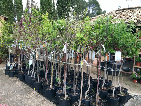 arboles-frutales-jardin-primavera-2016