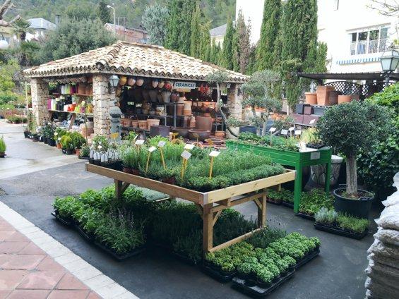 Plantas aromaticas para jardin trendy plantas aromticas with plantas aromaticas para jardin - Jardin de aromaticas ...