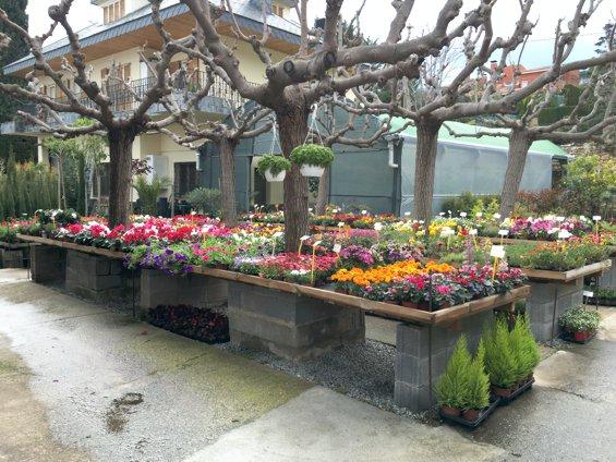 plantas-con-flor-jardin-primavera-2016