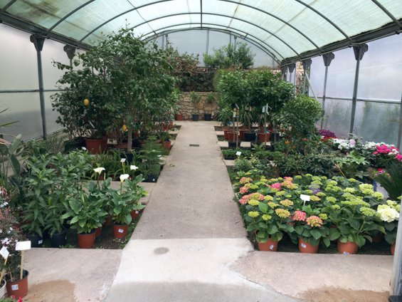 plantas-de-interior-jardin-primavera-2016_1