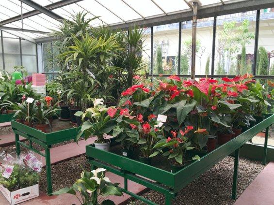 plantas-de-interior-jardin-primavera-2016_2