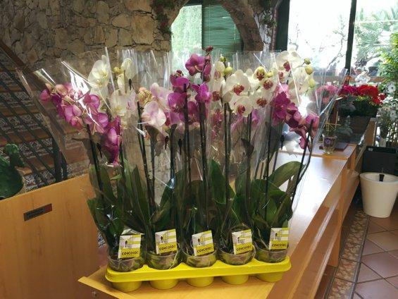 plantas-de-interior-jardin-primavera-2016_3