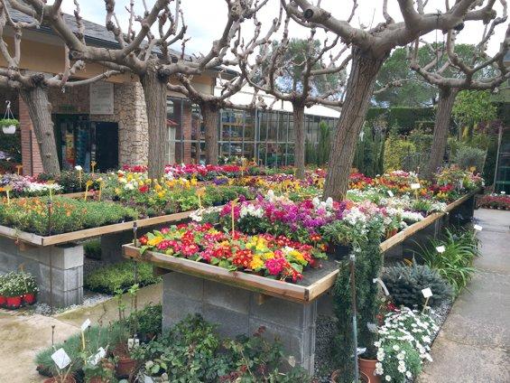 plantas-temporada-jardin-primavera-2016