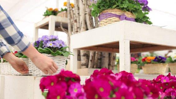 vive-la-primavera-en-tu-jardin