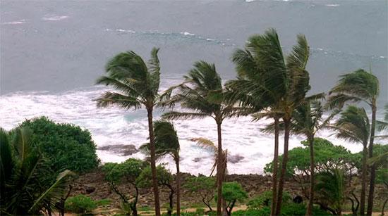 palmeras-resistencia-viento