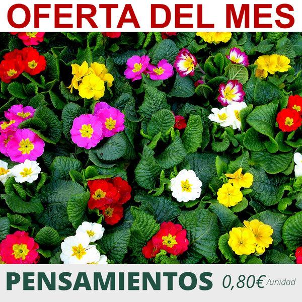 oferta planta pensamientos jardineria sanchez barcelona