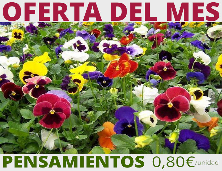 oferta pensamientos jardineria barcelona