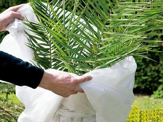 lonas-de-proteccion-invernal-plantas
