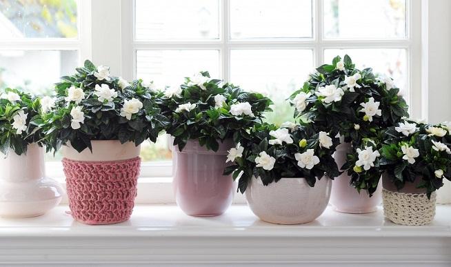 trasladar-plantas-jardin-en-interiores-invierno