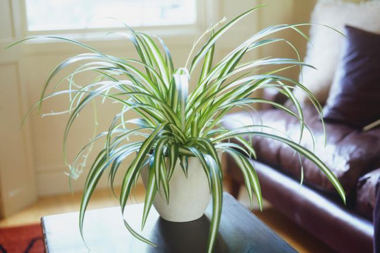 El cuidado de las plantas de interior en invierno centro - Cuidados plantas interior ...