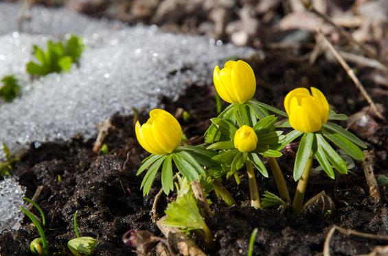 Cuidados de las plantas y jardin en febrero