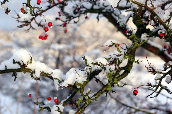 Cuidado de los arboles frutales en febrero