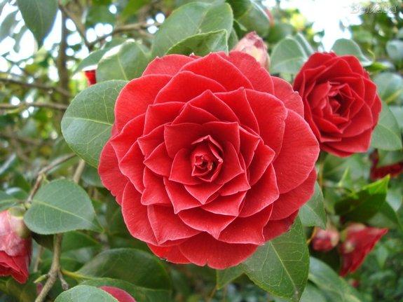 Explosión de vida y color en tu jardín o terraza esta primavera y verano.