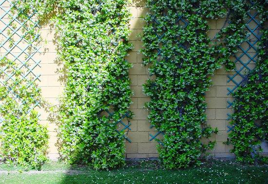 Centro de jardiner a s nchez garden center barcelona for Plantas trepadoras para muros