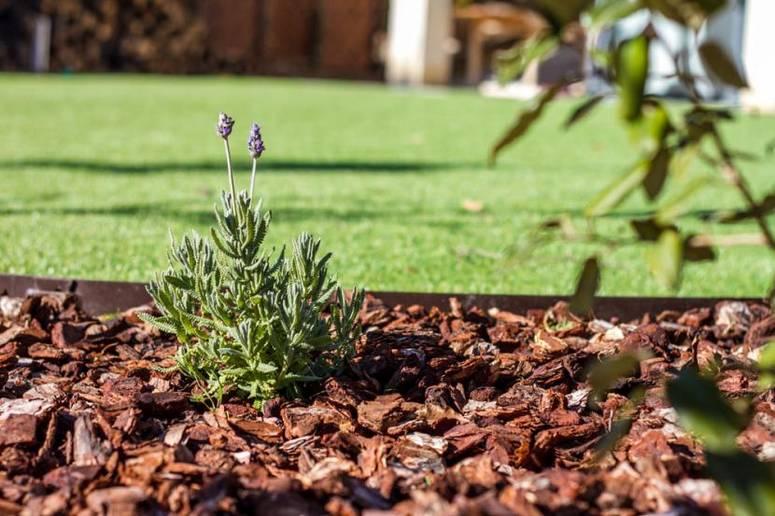 proteger-plantas-jardin-corteza-pino