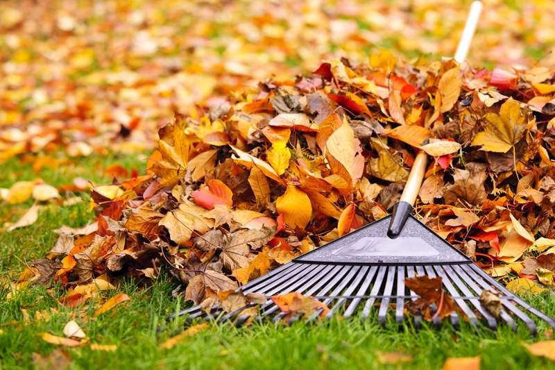 rastrillar-cesped-hojas-diciembre