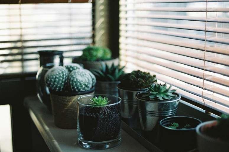 cuidado-plantas-de-interior-enero