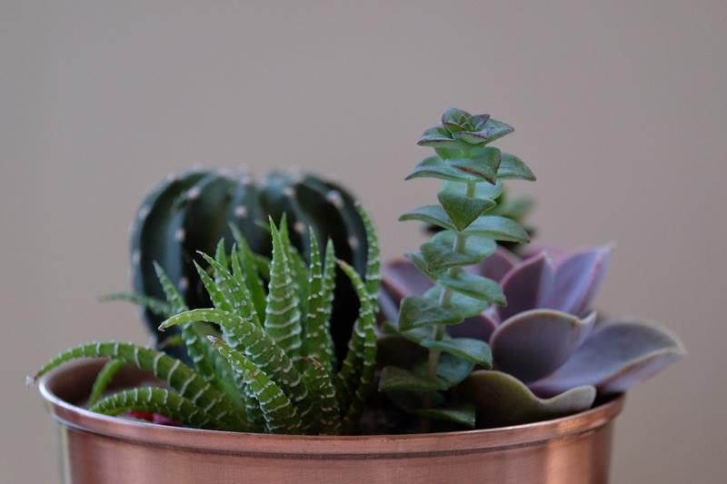 plantas-suculentas-mes-marzo-jardin