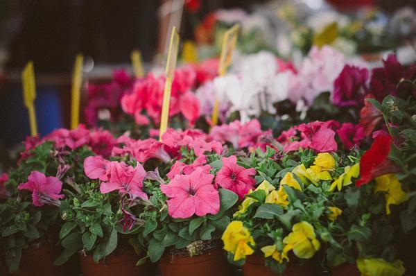 Tareas del jardín en abril