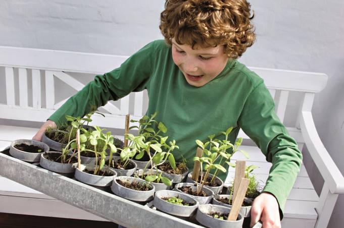Es tiempo de sembrar semillas de flores y plantas