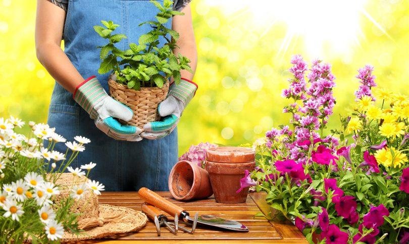 Tareas de jardín en julio