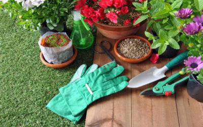 Tareas del jardín en septiembre