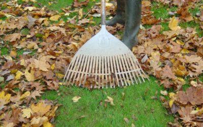 Tareas del jardín en noviembre