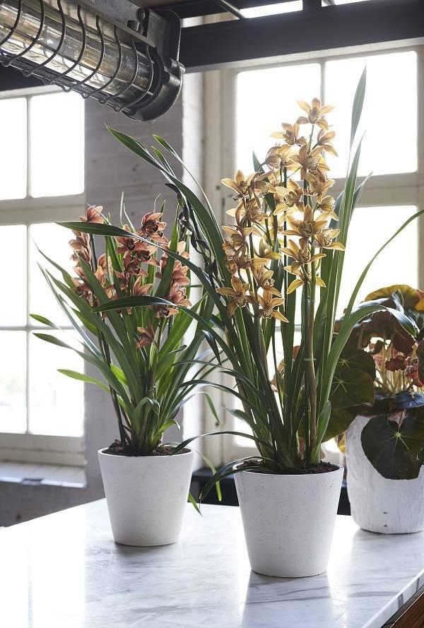 Cómo recuperar las plantas después del verano